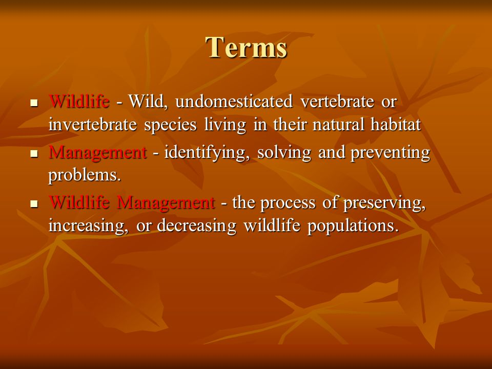 Terms Wildlife - Wild, undomesticated vertebrate or invertebrate species living in their natural habitat Wildlife - Wild, undomesticated vertebrate or