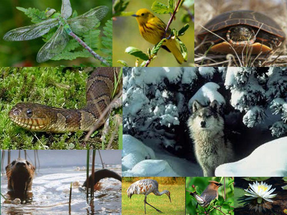 Celebrating a Century of Conservation