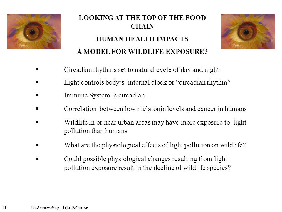 LOOKING AT THE TOP OF THE FOOD CHAIN HUMAN HEALTH IMPACTS A MODEL FOR WILDLIFE EXPOSURE.