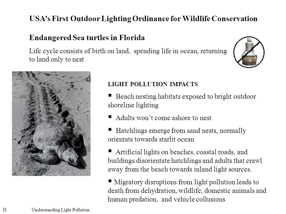 Endangered Sea turtles in Florida Life cycle consists of birth on land, spending life in ocean, returning to land only to nest LIGHT POLLUTION IMPACTS  Beach nesting habitats exposed to bright outdoor shoreline lighting  Adults won't come ashore to nest  Hatchlings emerge from sand nests, normally orientate towards starlit ocean  Artificial lights on beaches, coastal roads, and buildings disorientate hatchlings and adults that crawl away from the beach towards inland light sources.