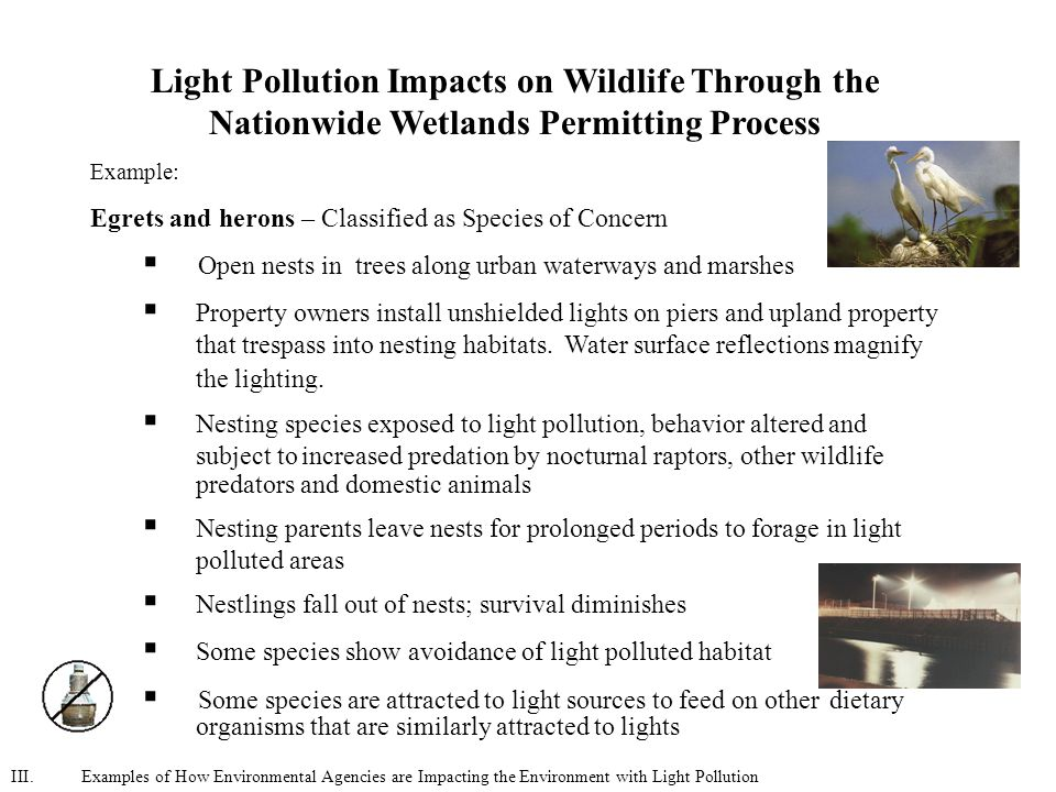 Light Pollution Impacts on Wildlife Through the Nationwide Wetlands Permitting Process Example: Egrets and herons – Classified as Species of Concern  Open nests in trees along urban waterways and marshes  Property owners install unshielded lights on piers and upland property that trespass into nesting habitats.
