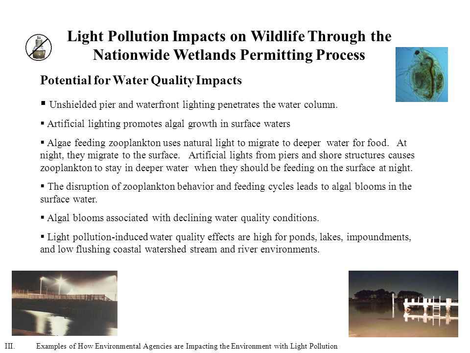 Light Pollution Impacts on Wildlife Through the Nationwide Wetlands Permitting Process Potential for Water Quality Impacts  Unshielded pier and waterfront lighting penetrates the water column.