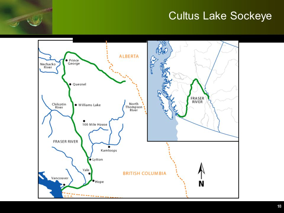 19 Cultus Lake Sockeye  Client: Fisheries and Oceans Canada  Multiple interests:  High visibility species, high importance to Conservation, commercial fishers, and First Nations  Worked with multi-stakeholder committee (approx.