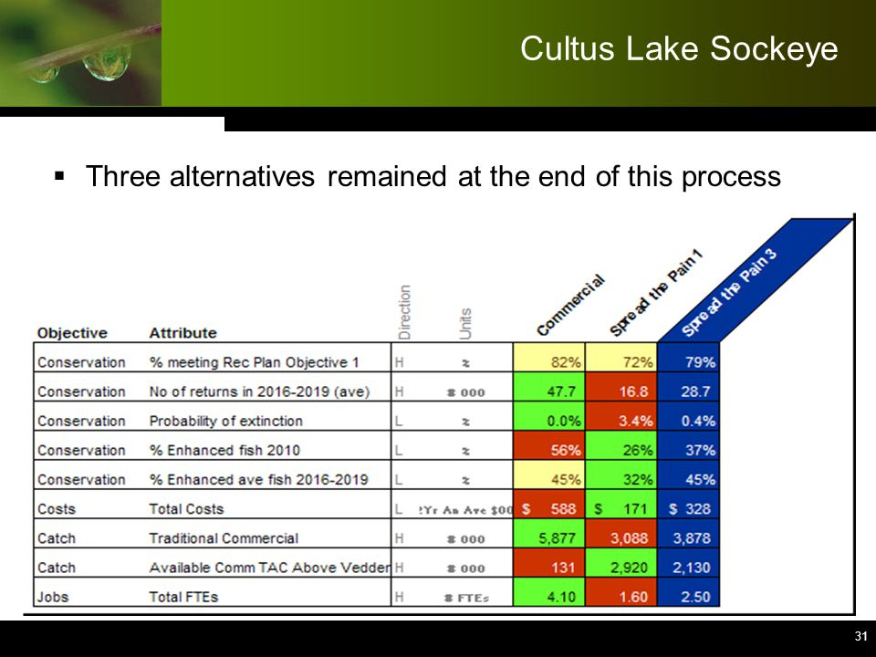 31 Cultus Lake Sockeye  Three alternatives remained at the end of this process 31