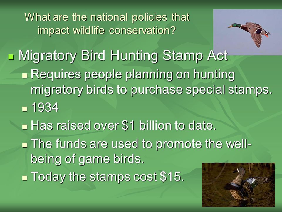 What are the national policies that impact wildlife conservation? Migratory Bird Hunting Stamp Act Migratory Bird Hunting Stamp Act Requires people pl