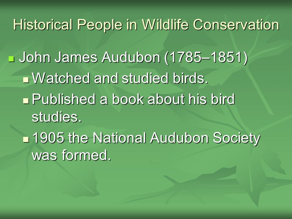 Historical People in Wildlife Conservation John James Audubon (1785–1851) John James Audubon (1785–1851) Watched and studied birds. Watched and studie