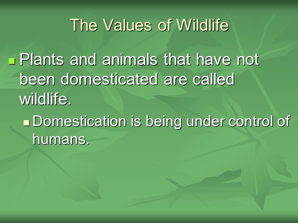 The Values of Wildlife Plants and animals that have not been domesticated are called wildlife. Plants and animals that have not been domesticated are