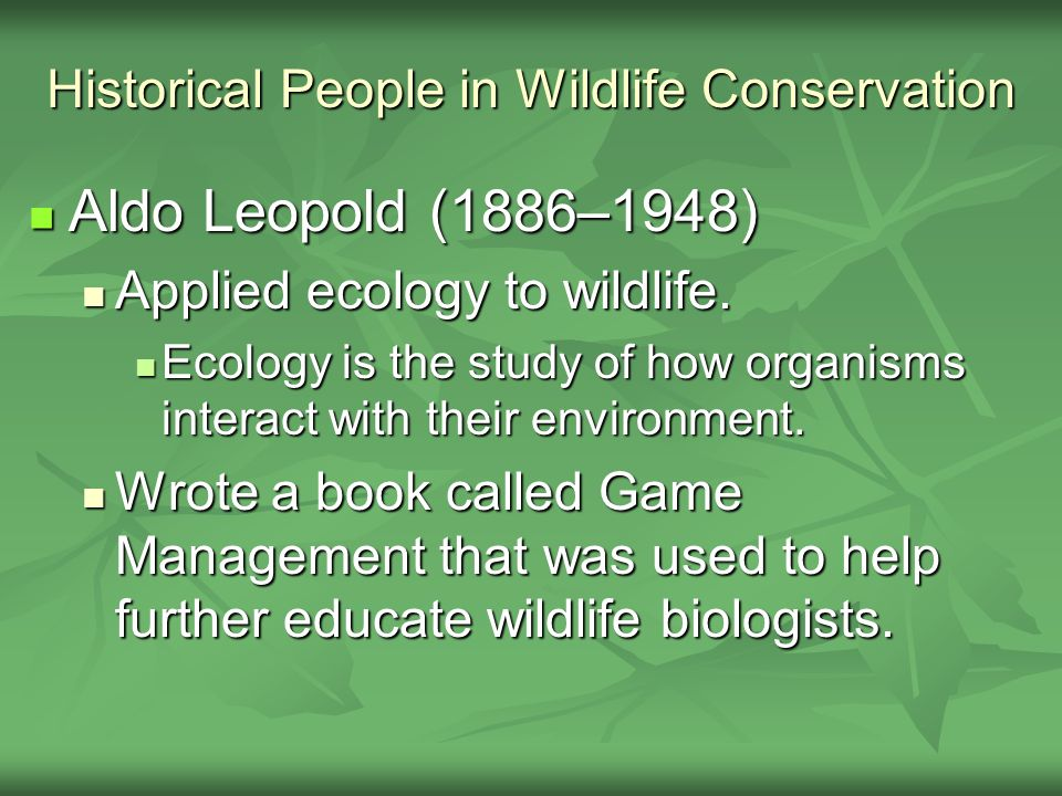 Historical People in Wildlife Conservation Aldo Leopold (1886–1948) Aldo Leopold (1886–1948) Applied ecology to wildlife. Applied ecology to wildlife.