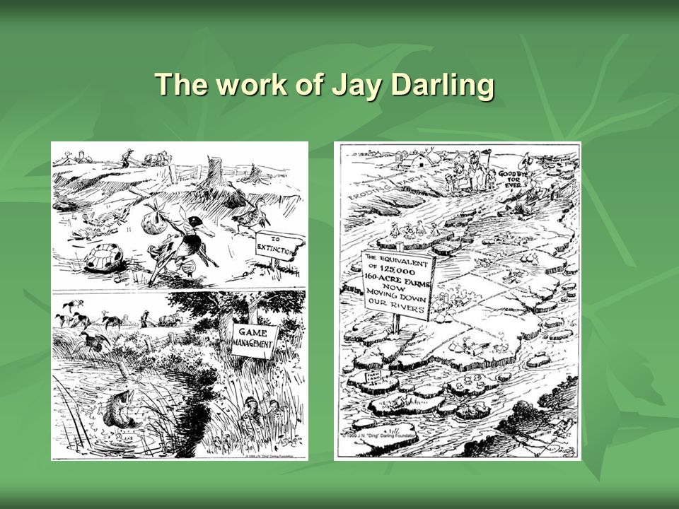 The work of Jay Darling