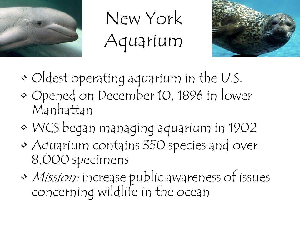 New York Aquarium Oldest operating aquarium in the U.S. Opened on December 10, 1896 in lower Manhattan WCS began managing aquarium in 1902 Aquarium co