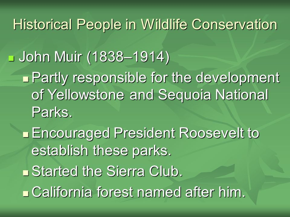 Historical People in Wildlife Conservation John Muir (1838–1914) John Muir (1838–1914) Partly responsible for the development of Yellowstone and Sequoia National Parks.