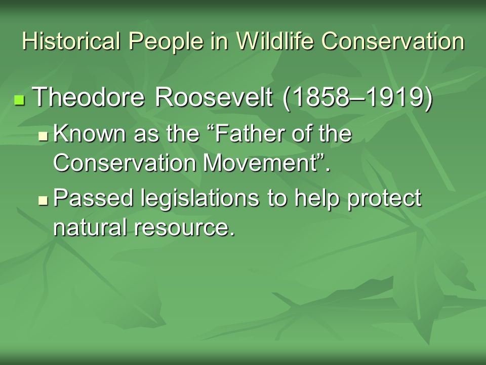 Historical People in Wildlife Conservation Theodore Roosevelt (1858–1919) Theodore Roosevelt (1858–1919) Known as the Father of the Conservation Movement .
