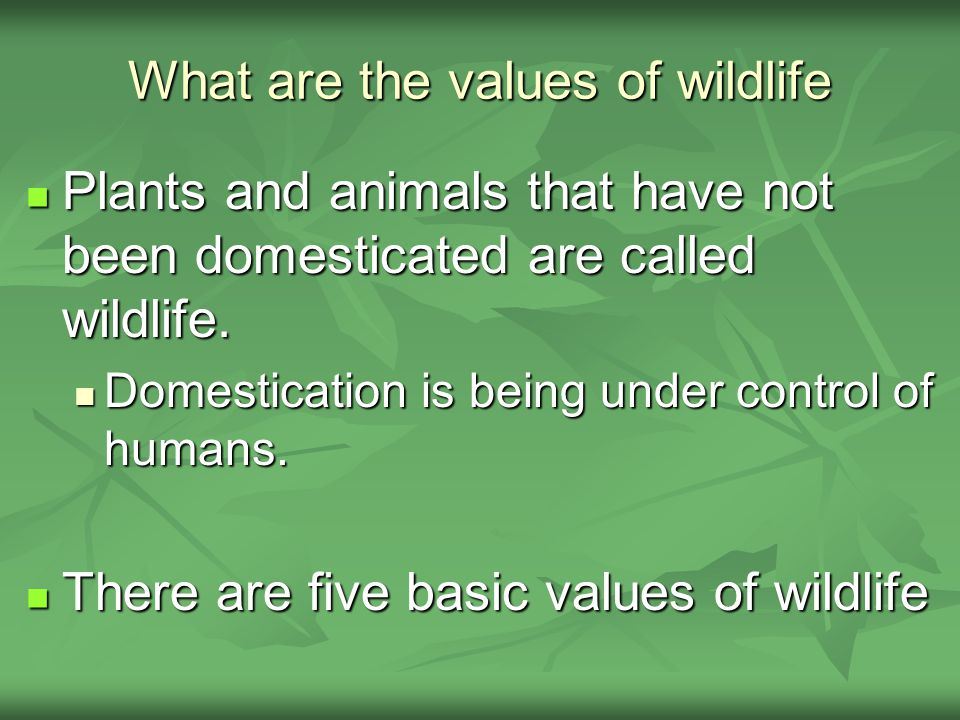 What are the values of wildlife Plants and animals that have not been domesticated are called wildlife.