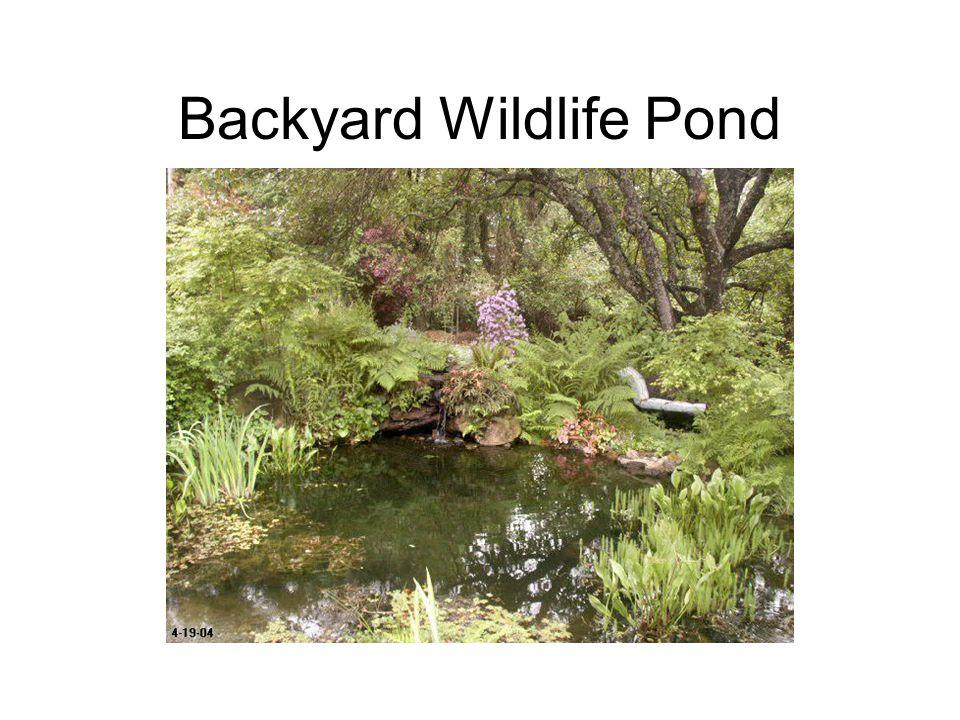 Backyard Wildlife Pond