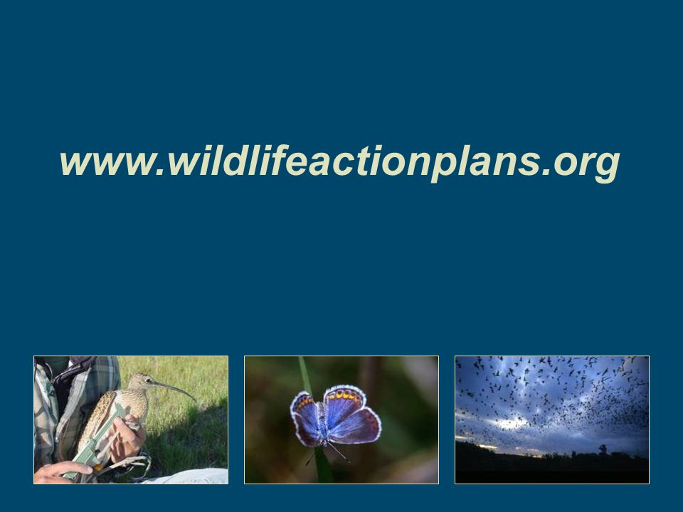 www.wildlifeactionplans.org