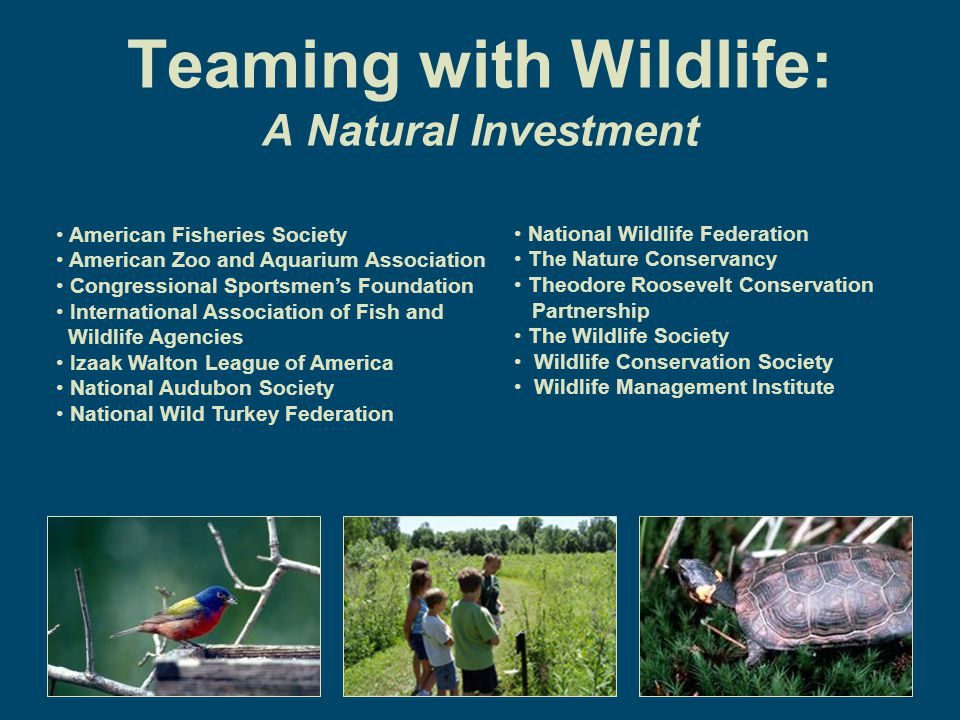 Teaming with Wildlife: A Natural Investment American Fisheries Society American Zoo and Aquarium Association Congressional Sportsmen's Foundation International Association of Fish and Wildlife Agencies Izaak Walton League of America National Audubon Society National Wild Turkey Federation National Wildlife Federation The Nature Conservancy Theodore Roosevelt Conservation Partnership The Wildlife Society Wildlife Conservation Society Wildlife Management Institute