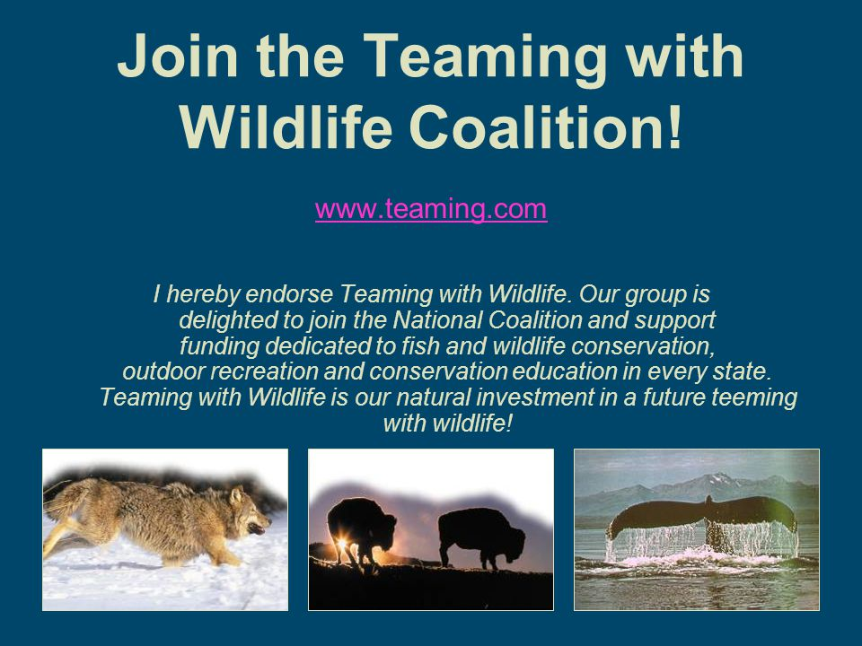 Join the Teaming with Wildlife Coalition. www.teaming.com I hereby endorse Teaming with Wildlife.