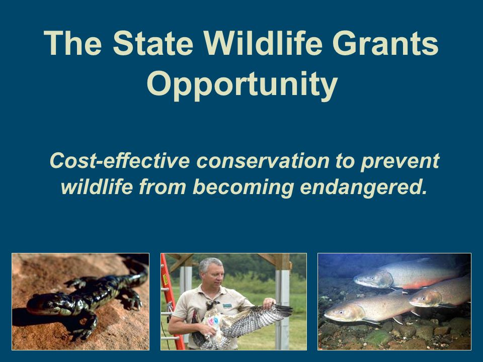 The State Wildlife Grants Opportunity Cost-effective conservation to prevent wildlife from becoming endangered.
