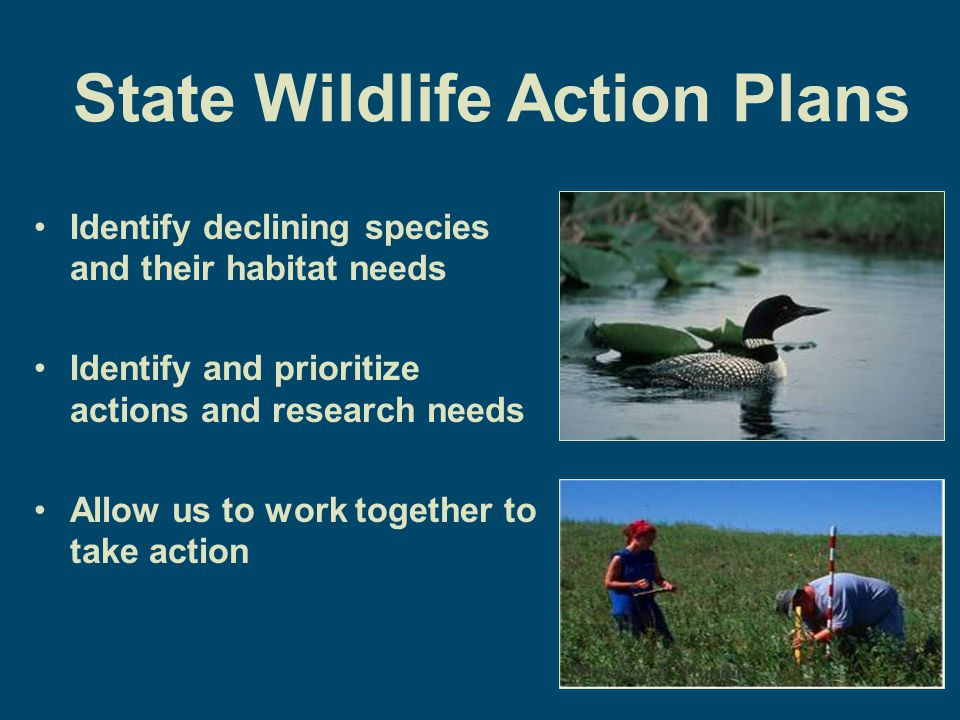 Teaming with Wildlife Conservation Sustain a diverse array of fish and wildlife and their habitats, with an emphasis on preventing species from becoming endangered.
