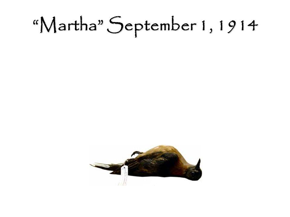 Martha September 1, 1914