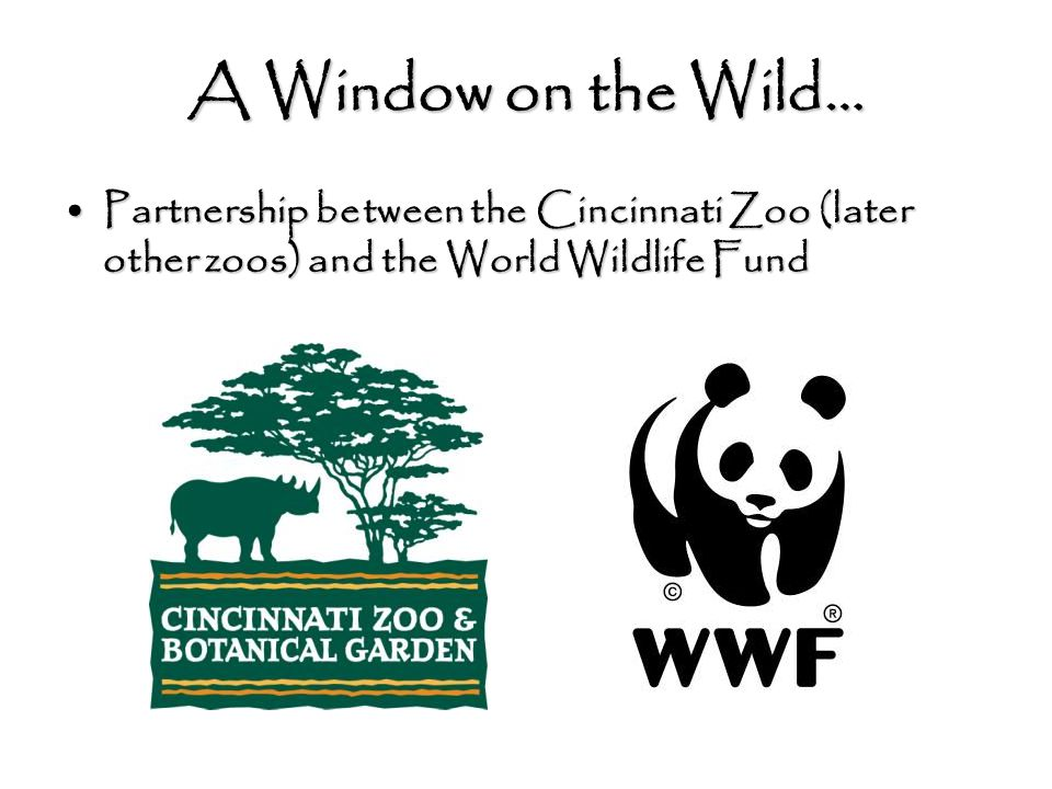 A Window on the Wild… Partnership between the Cincinnati Zoo (later other zoos) and the World Wildlife FundPartnership between the Cincinnati Zoo (later other zoos) and the World Wildlife Fund