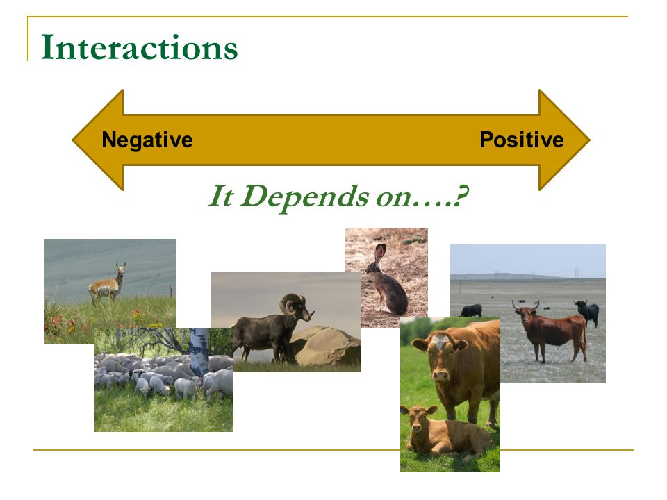 Interactions NegativePositive It Depends on….?