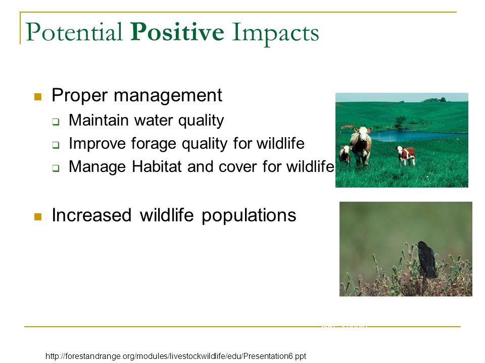 Potential Positive Impacts Proper management  Maintain water quality  Improve forage quality for wildlife  Manage Habitat and cover for wildlife Increased wildlife populations NRCS photo http://forestandrange.org/modules/livestockwildlife/edu/Presentation6.ppt