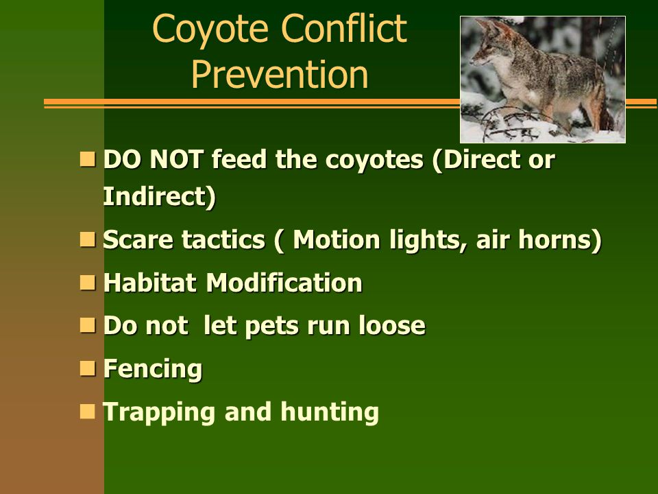 Coyote Conflict Prevention nDO NOT feed the coyotes (Direct or Indirect) nScare tactics ( Motion lights, air horns) nHabitat Modification nDo not let pets run loose nFencing nTrapping and hunting