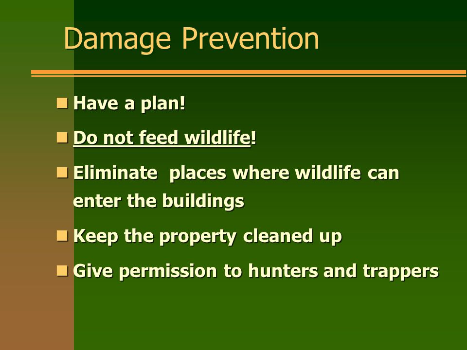 Damage Prevention nHave a plan. nDo not feed wildlife.