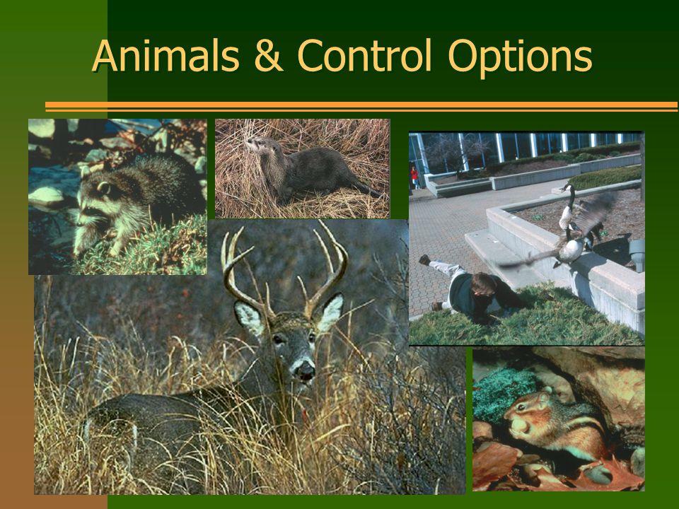 Animals & Control Options