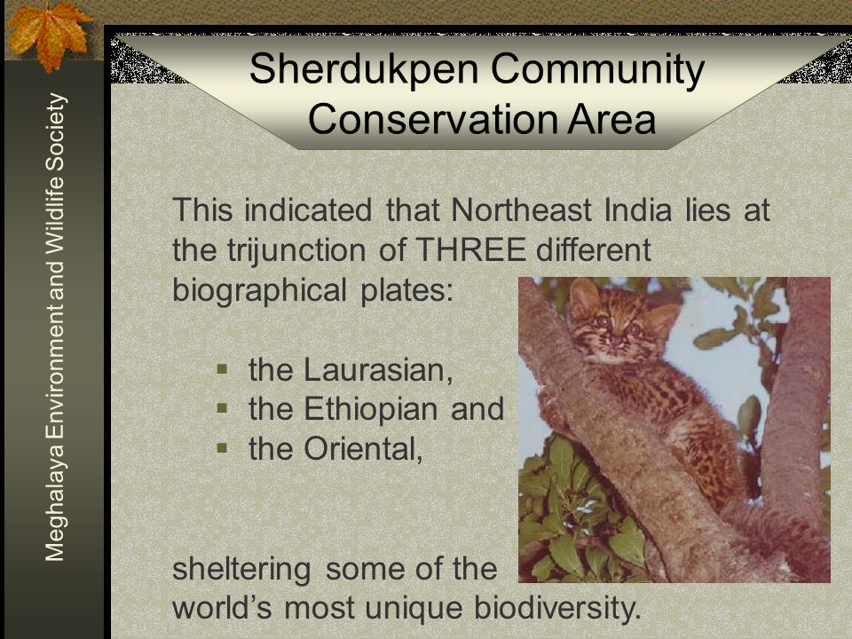Sherdukpen Community Conservation Area Meghalaya Environment and Wildlife Society The needs of the community and the benefits of conservation were widely discussed with the Sherdukpen Clan leaders… …resulting in the Sherdukpen Clan of the State resolving to set aside a large tract of their community land for the purpose of conservation of flora and fauna.