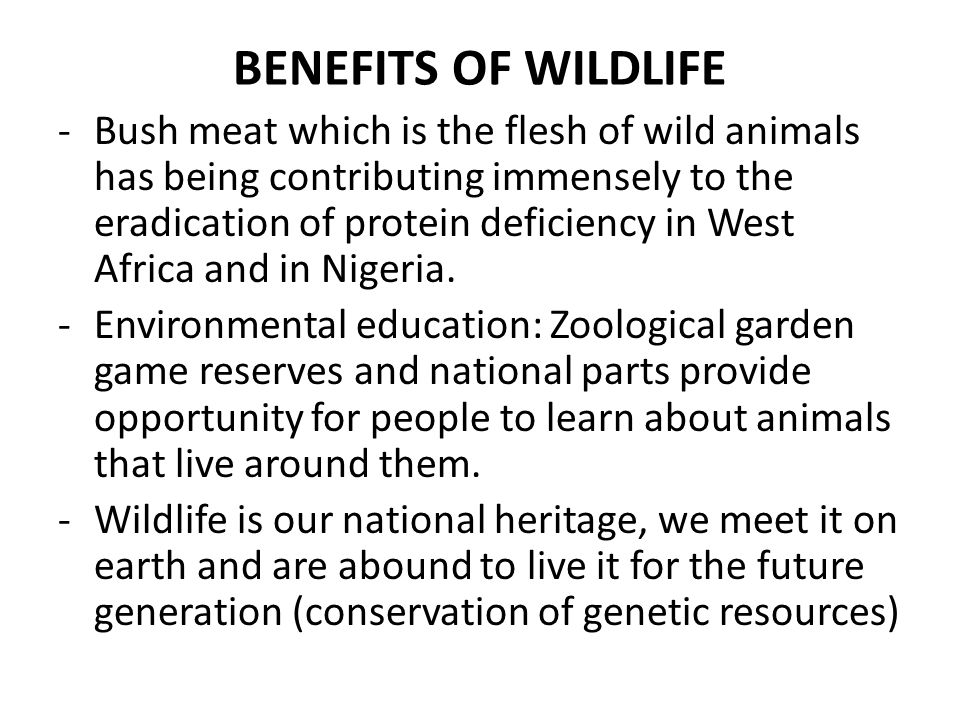 BENEFITS OF WILDLIFE -Bush meat which is the flesh of wild animals has being contributing immensely to the eradication of protein deficiency in West A