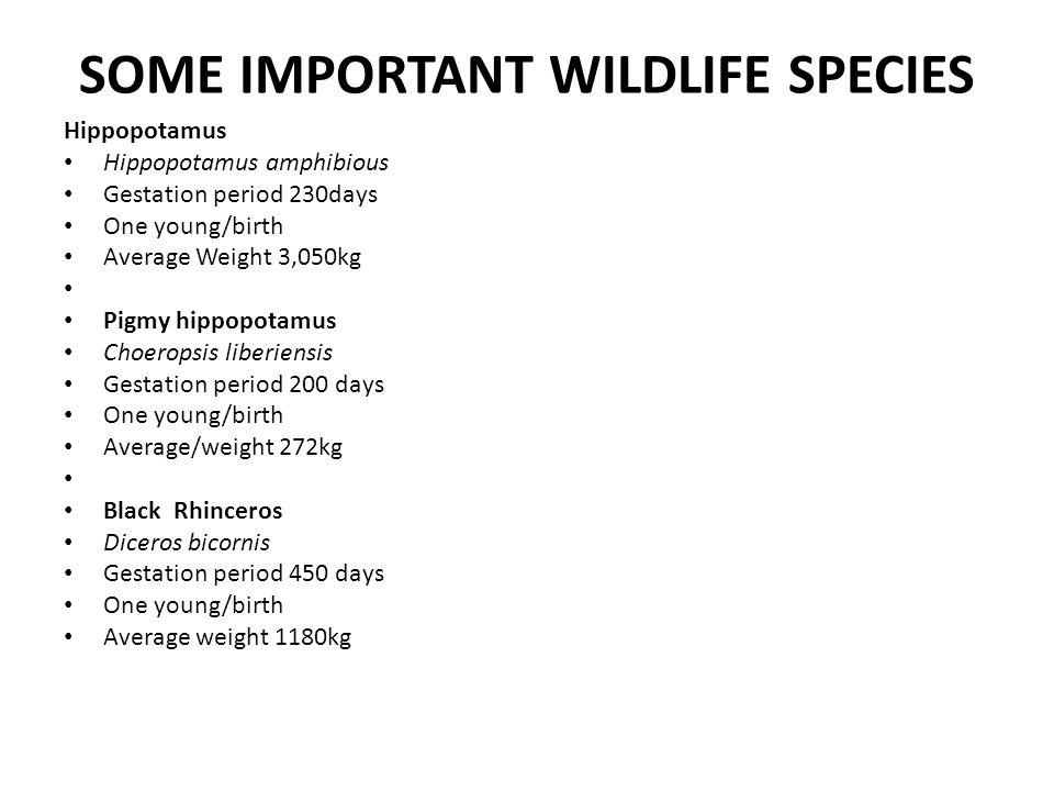 SOME IMPORTANT WILDLIFE SPECIES Hippopotamus Hippopotamus amphibious Gestation period 230days One young/birth Average Weight 3,050kg Pigmy hippopotamu