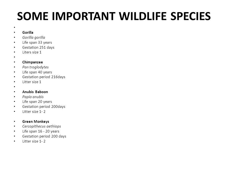 SOME IMPORTANT WILDLIFE SPECIES Gorilla Gorilla gorilla Life span 33 years Gestation 251 days Liters size 1 Chimpanzee Pan troglodytes Life span 40 ye