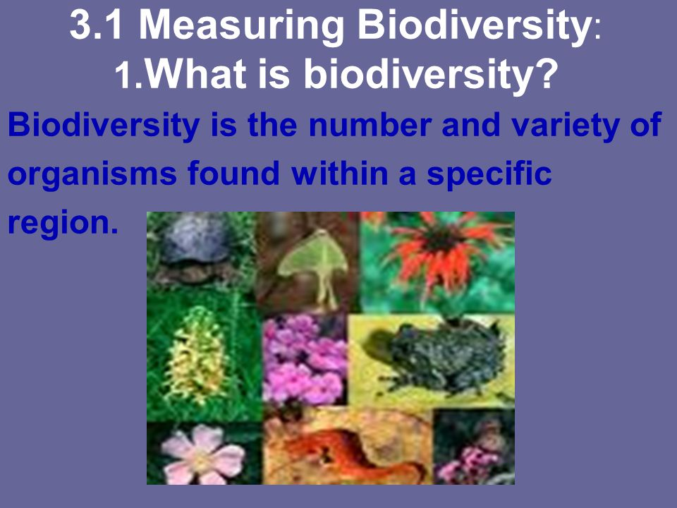 3.1 Measuring Biodiversity : 1. What is biodiversity? Biodiversity is the number and variety of organisms found within a specific region.