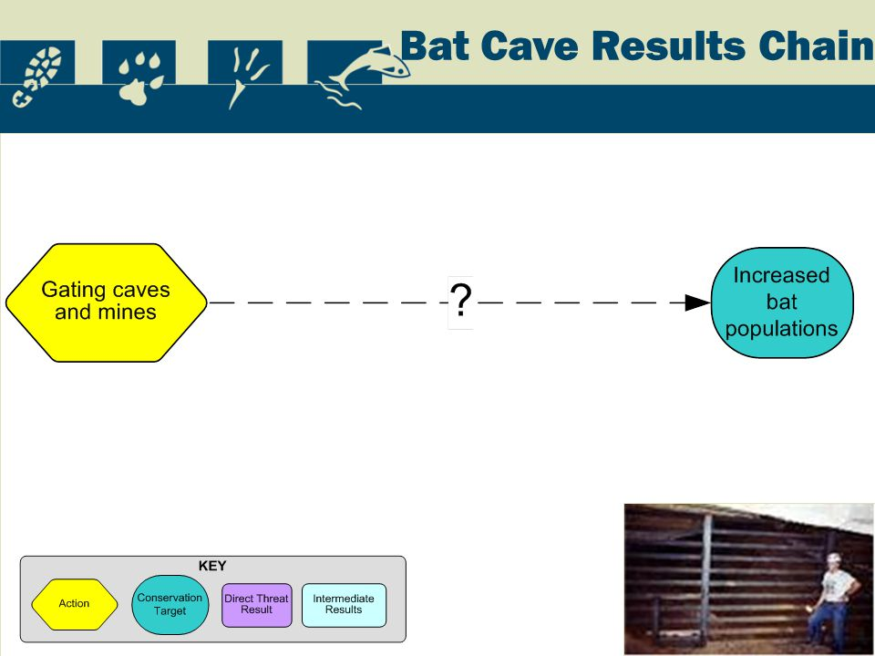 Bat Cave Results Chain