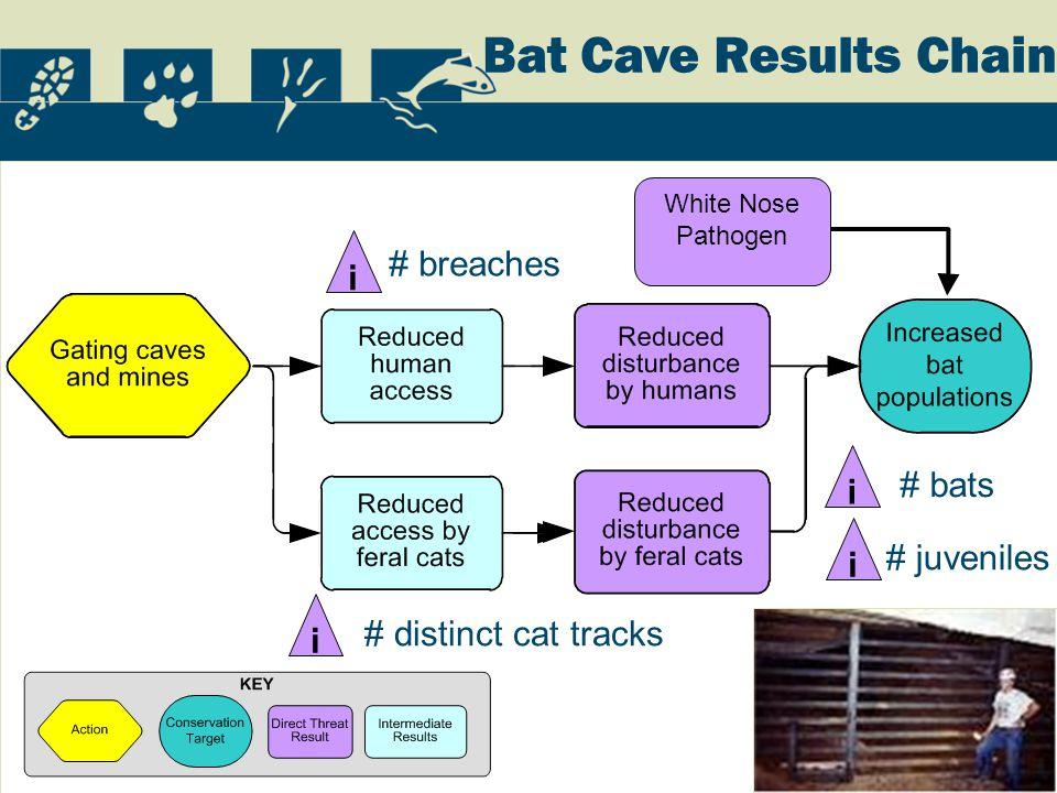 Bat Cave Results Chain i # breaches i # distinct cat tracks i # bats i # juveniles White Nose Pathogen