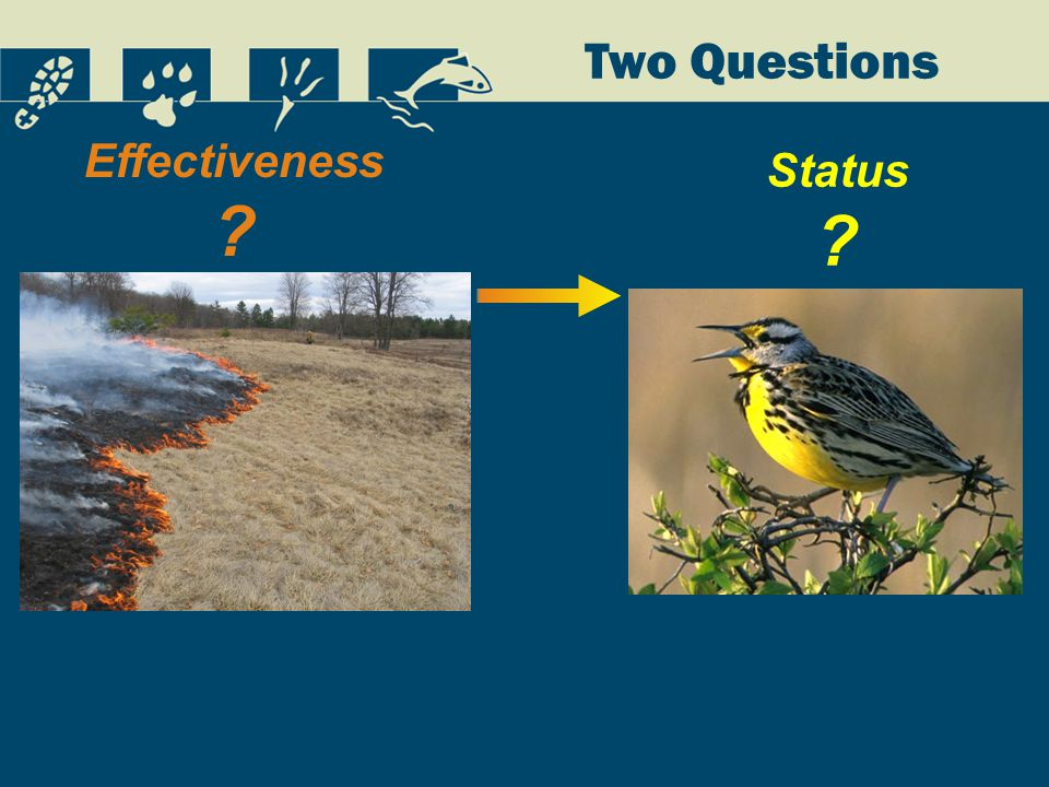 Two Questions Status Effectiveness