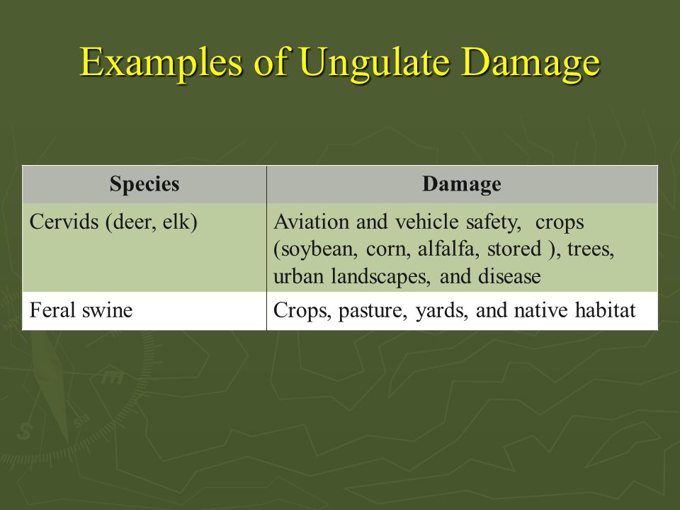 Examples of Ungulate Damage SpeciesDamage Cervids (deer, elk)Aviation and vehicle safety, crops (soybean, corn, alfalfa, stored ), trees, urban landscapes, and disease Feral swineCrops, pasture, yards, and native habitat