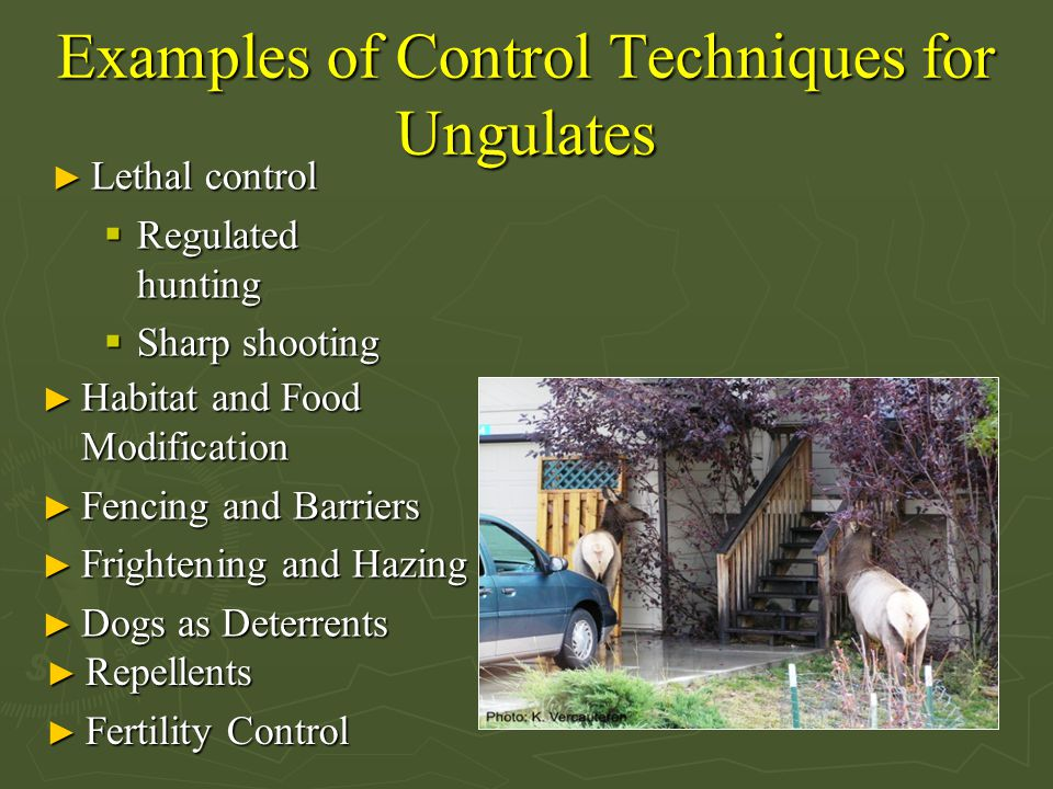 Examples of Control Techniques for Ungulates ► Habitat and Food Modification ► Fencing and Barriers ► Frightening and Hazing ► Dogs as Deterrents ► Repellents ► Fertility Control ► Lethal control  Regulated hunting  Sharp shooting