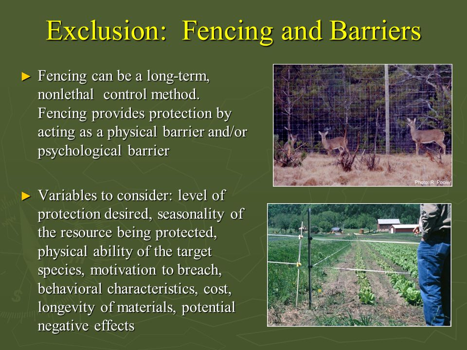 Exclusion: Fencing and Barriers ► Fencing can be a long-term, nonlethal control method. Fencing provides protection by acting as a physical barrier an