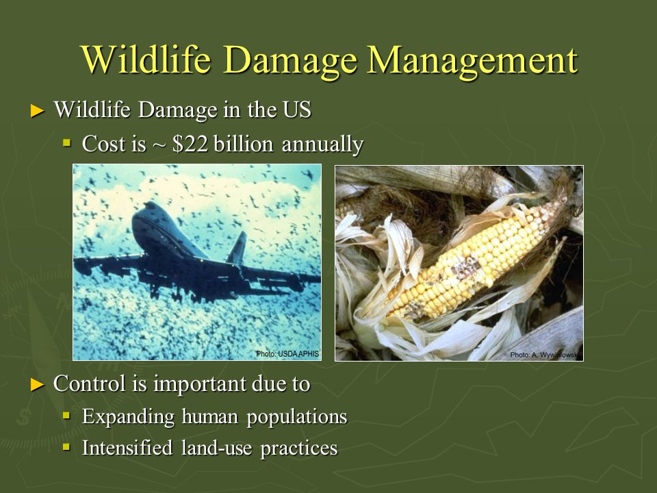 Wildlife Damage Management ► Wildlife Damage in the US  Cost is ~ $22 billion annually ► Control is important due to  Expanding human populations 