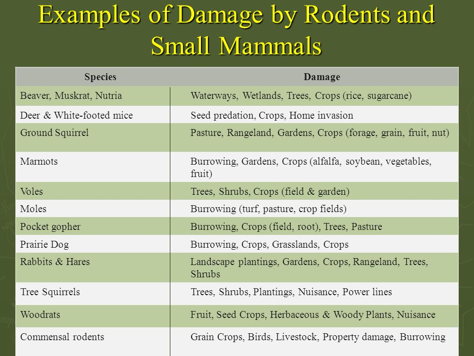Examples of Damage by Rodents and Small Mammals SpeciesDamage Beaver, Muskrat, NutriaWaterways, Wetlands, Trees, Crops (rice, sugarcane) Deer & White-footed miceSeed predation, Crops, Home invasion Ground SquirrelPasture, Rangeland, Gardens, Crops (forage, grain, fruit, nut) MarmotsBurrowing, Gardens, Crops (alfalfa, soybean, vegetables, fruit) VolesTrees, Shrubs, Crops (field & garden) MolesBurrowing (turf, pasture, crop fields) Pocket gopherBurrowing, Crops (field, root), Trees, Pasture Prairie DogBurrowing, Crops, Grasslands, Crops Rabbits & HaresLandscape plantings, Gardens, Crops, Rangeland, Trees, Shrubs Tree SquirrelsTrees, Shrubs, Plantings, Nuisance, Power lines WoodratsFruit, Seed Crops, Herbaceous & Woody Plants, Nuisance Commensal rodentsGrain Crops, Birds, Livestock, Property damage, Burrowing