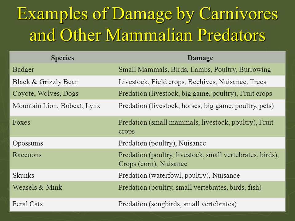 Examples of Damage by Carnivores and Other Mammalian Predators SpeciesDamage BadgerSmall Mammals, Birds, Lambs, Poultry, Burrowing Black & Grizzly Bea