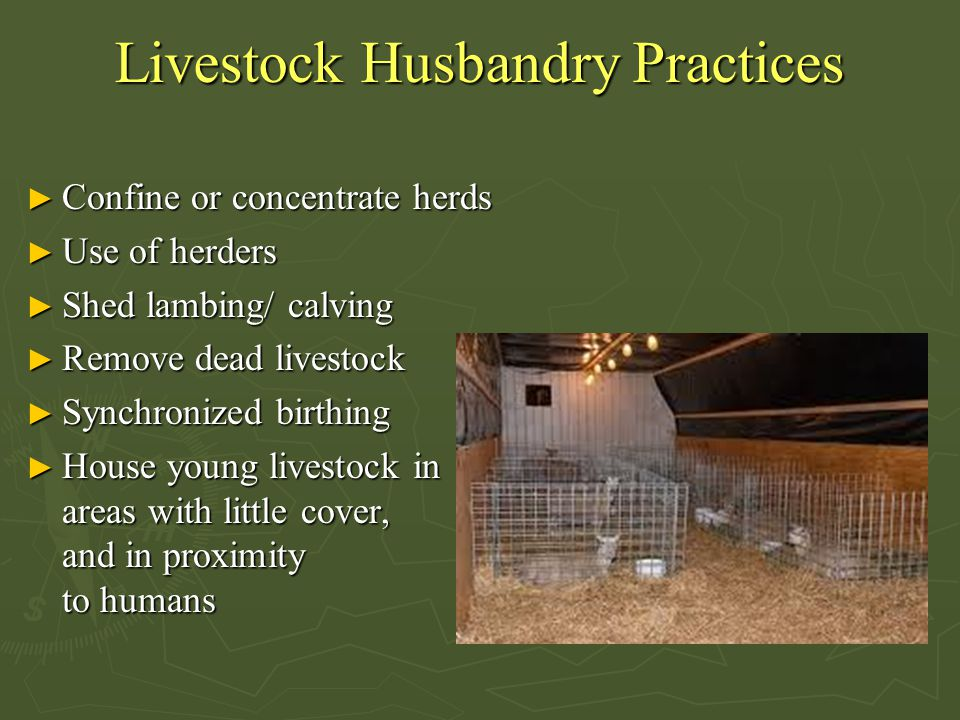 Livestock Husbandry Practices ► Confine or concentrate herds ► Use of herders ► Shed lambing/ calving ► Remove dead livestock ► Synchronized birthing ► House young livestock in areas with little cover, and in proximity to humans