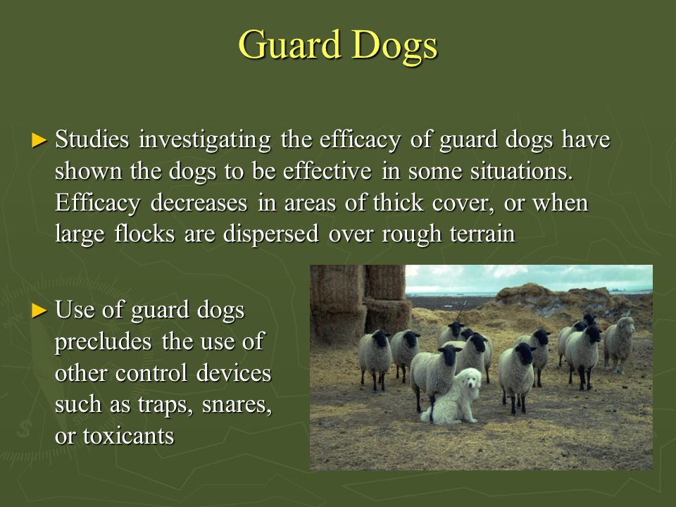 Guard Dogs ► Studies investigating the efficacy of guard dogs have shown the dogs to be effective in some situations. Efficacy decreases in areas of t