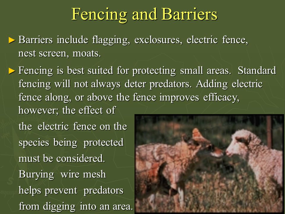 Fencing and Barriers ► Barriers include flagging, exclosures, electric fence, nest screen, moats. ► Fencing is best suited for protecting small areas.