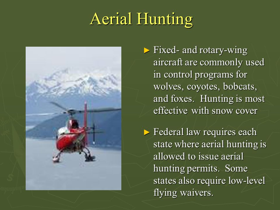 Aerial Hunting ► Fixed- and rotary-wing aircraft are commonly used in control programs for wolves, coyotes, bobcats, and foxes. Hunting is most effect