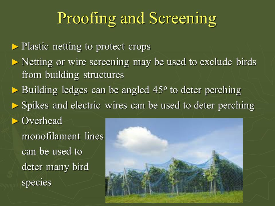 Proofing and Screening ► Plastic netting to protect crops ► Netting or wire screening may be used to exclude birds from building structures ► Building