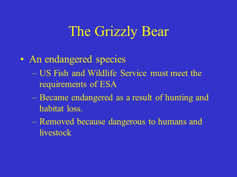 The Grizzly Bear An endangered species –US Fish and Wildlife Service must meet the requirements of ESA –Became endangered as a result of hunting and h